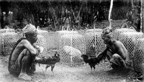 Sabung Ayam di Bali